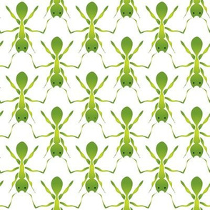 Here come the green ants