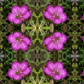 6744589-bee-helps-pollenate-purple-wildflower