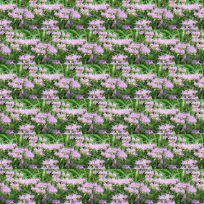 purple-wildflowers-110661299266535jBM
