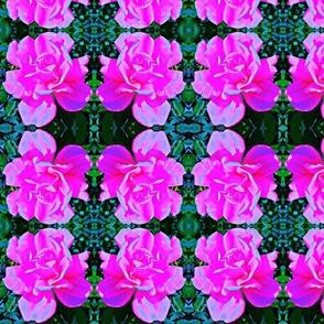 roses-ed