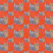Yorkie Tangerine Hearts