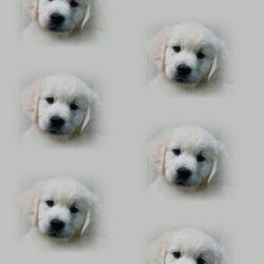 Jaska_Puppy_Fabric