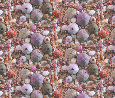 Sea_Urchins_and_Shells by Sylvie fabric by art_on_fabric on Spoonflower - custom fabric