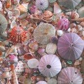 Rrrrsea_urchins_and_shells_halfdrop_shop_thumb