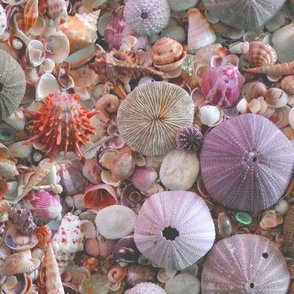 Sea_Urchins_and_Shells by Sylvie