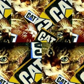 What Cat ?