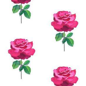 Rose Essence II 2013