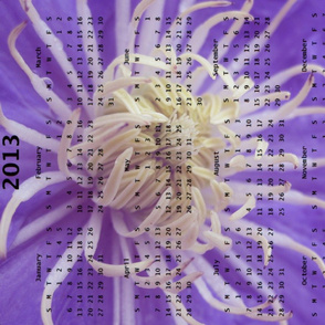 2013 Calendar - Flowers - Purple Spider Chrysanthemums