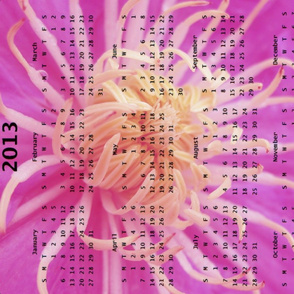 2013 Calendar - Flowers - Pink Spider Chrysanthemums