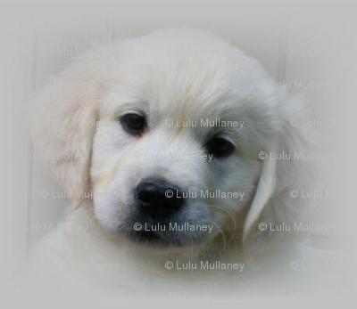Jaska_Puppy_Fabric_Small