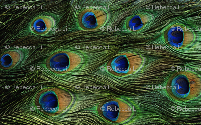 Peacock-feathers-texture-pattern-backgrounds-pictures_preview