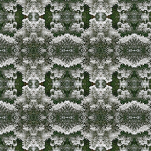 Winter Pines_5399