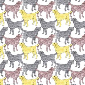 Colorful Labrador sketches