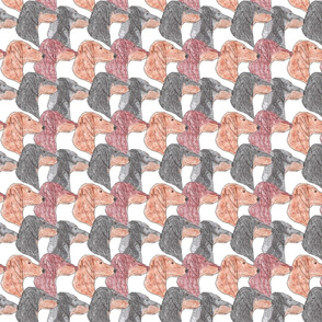 Dachshund faces