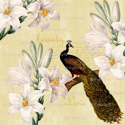Peacock Lilies
