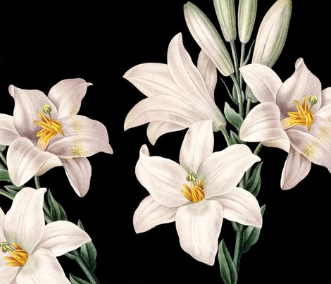 Md_bw_lilies_3_shop_preview
