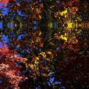 Reynolda leaves