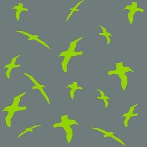 Albatross Flight