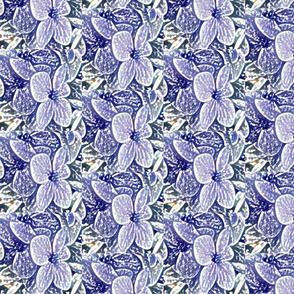Lucile's hydrangeas - lavender white edge