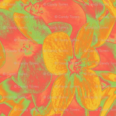 Lucile's hydrangeas - yellow & orange #1