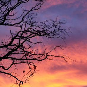 January Sunset horizontal