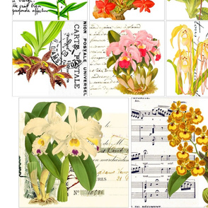 orchid_panel_1