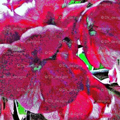 geraminum flower
