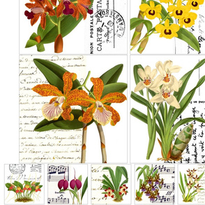 orchid_panel_2
