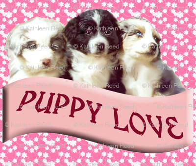 Australian shepherd puppy love