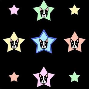 Boston Terrier Stars