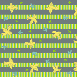 birds striped _1