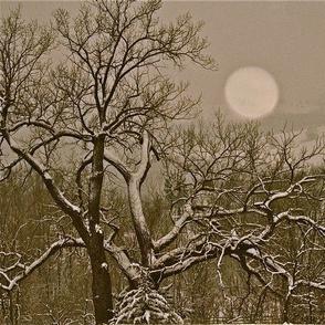 Winter_Moon