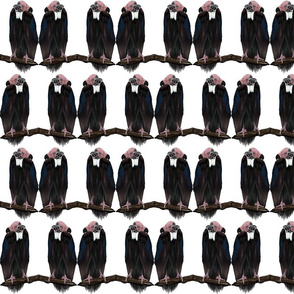 Vulture Buddies