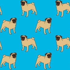 Pugs on turquoise