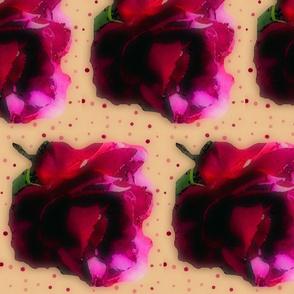 rose_large__altered