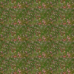 leaves_grassu6780