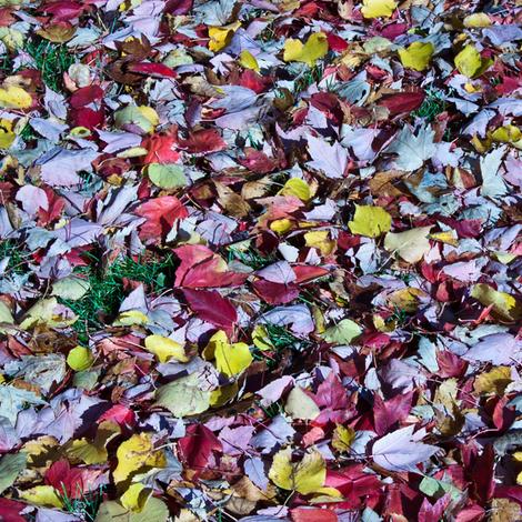 leavesyrongrassu6749 fabric by kellie_1982_photos on Spoonflower - custom fabric