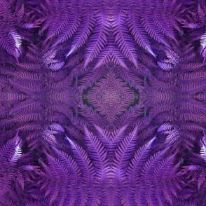 Violet Fern