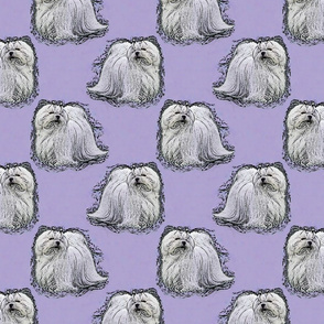 Posing Maltese - purple