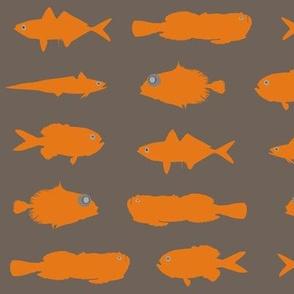 Orange Fish Funk