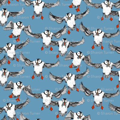 Atlantic Puffins blue