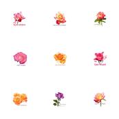 Roses 150