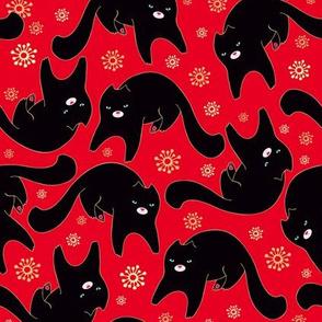 Black cat on red carpet