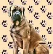 mastiff_with_pawprints