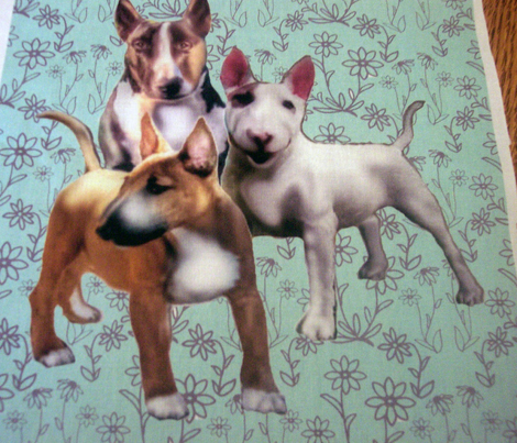 1591245_rbull_terriers_comment_248513_preview