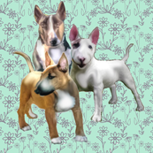 Bull Terriers and Flowers