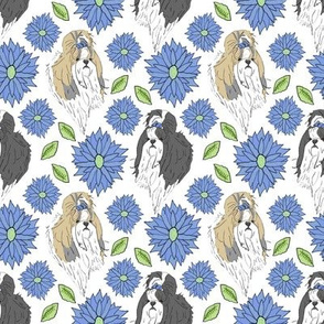 Shih Tzu and Chrysanthemum - blue