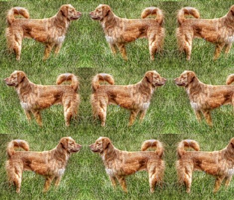Duck Tollers In The Grass fabric by dogdaze_ on Spoonflower - custom fabric