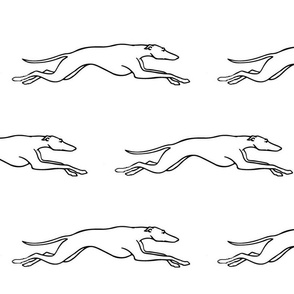 Racing Greyhound