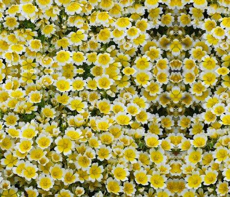 Rr2010_08_25_041_crop_shop_preview